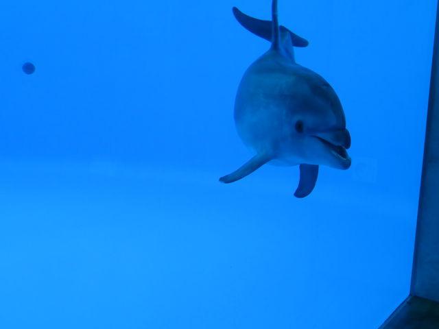 フレンドリーな「アイル」_九十九島水族館海きらら
