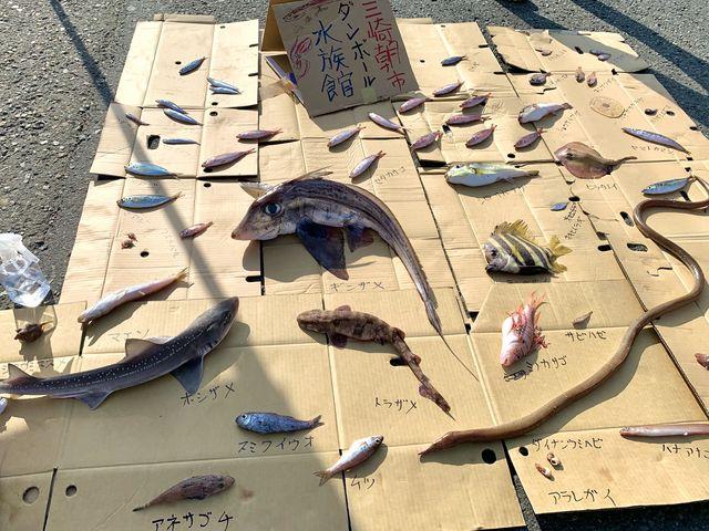 【三崎朝市】朝獲れた魚のうち食用に向かないものを展示_三崎朝市