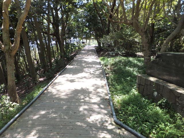 展望台から木もれ日テラスへの道_横山