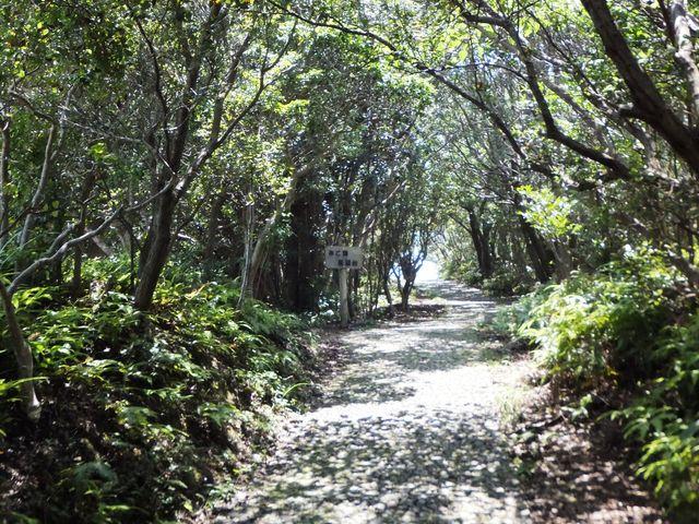 みはらし展望台から英虞湾展望台に続く散策路_横山