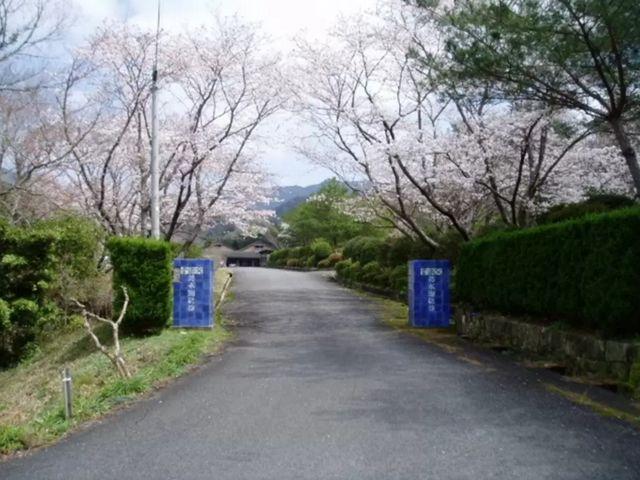 看板から左を見ると、1万坪を有する敷地に、桜公園と全行程を有する工場があります。_幸楽窯 徳永陶磁器(株)