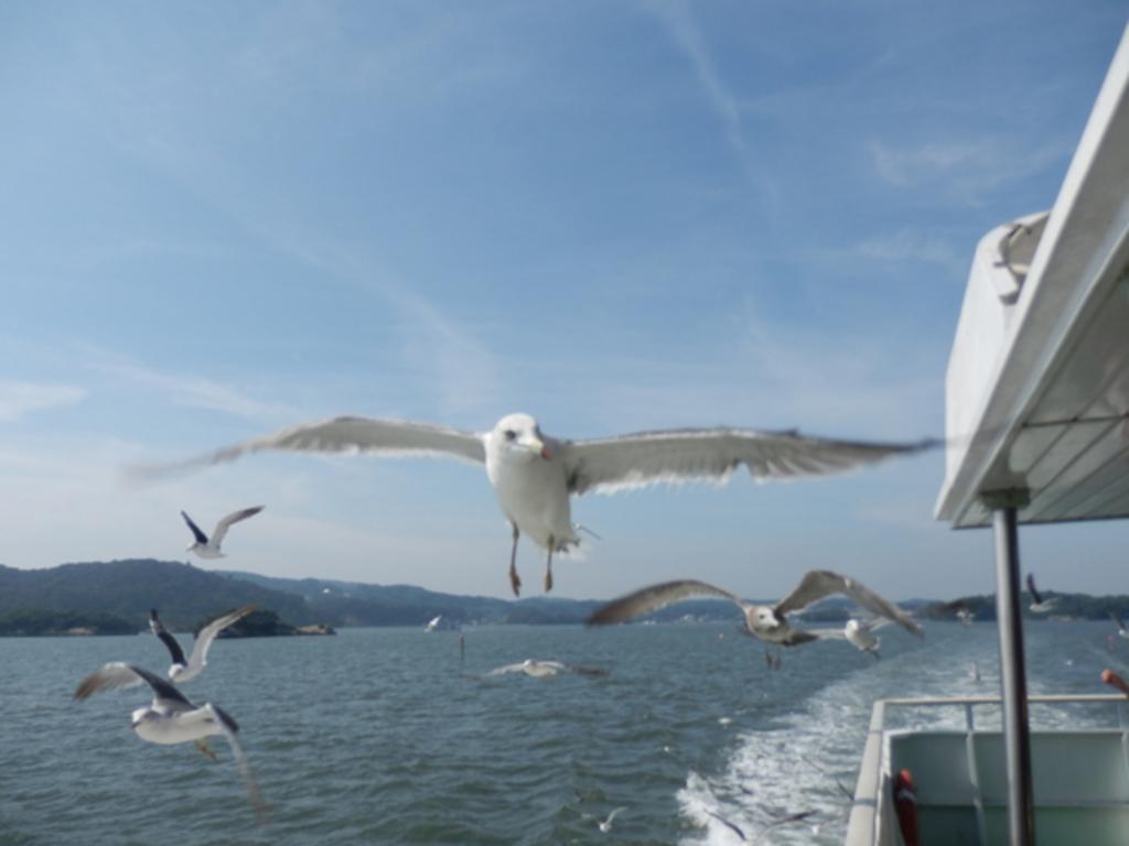 松島島巡り遊覧船