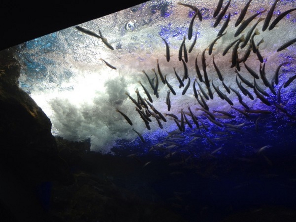 道の駅 おんねゆ温泉 北の大地の水族館〈山の水族館〉