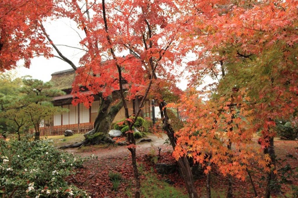 秋に行きたい【滋賀】おすすめ観光スポット20選!紅葉スポットも!