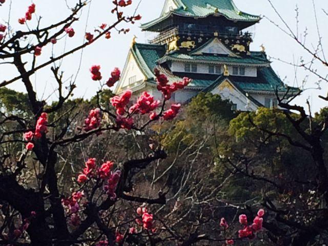 梅のバックに!_大阪城天守閣
