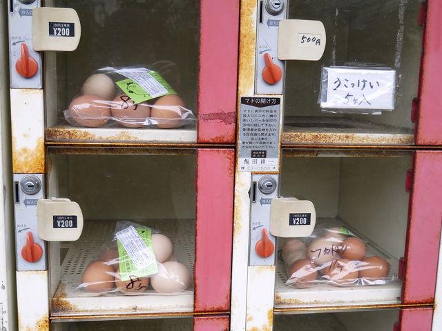 うこっけいの卵もあります。_自家たまご直売所