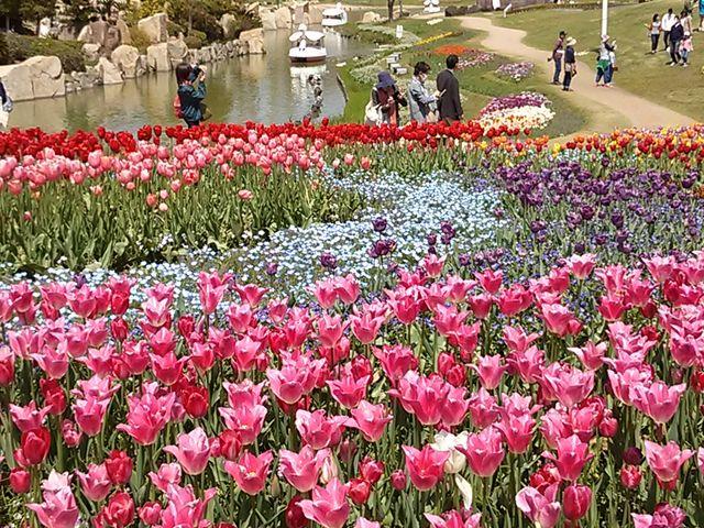 土曜日晴天チューリップの色が映えていました。_淡路夢舞台温室・奇跡の星植物館