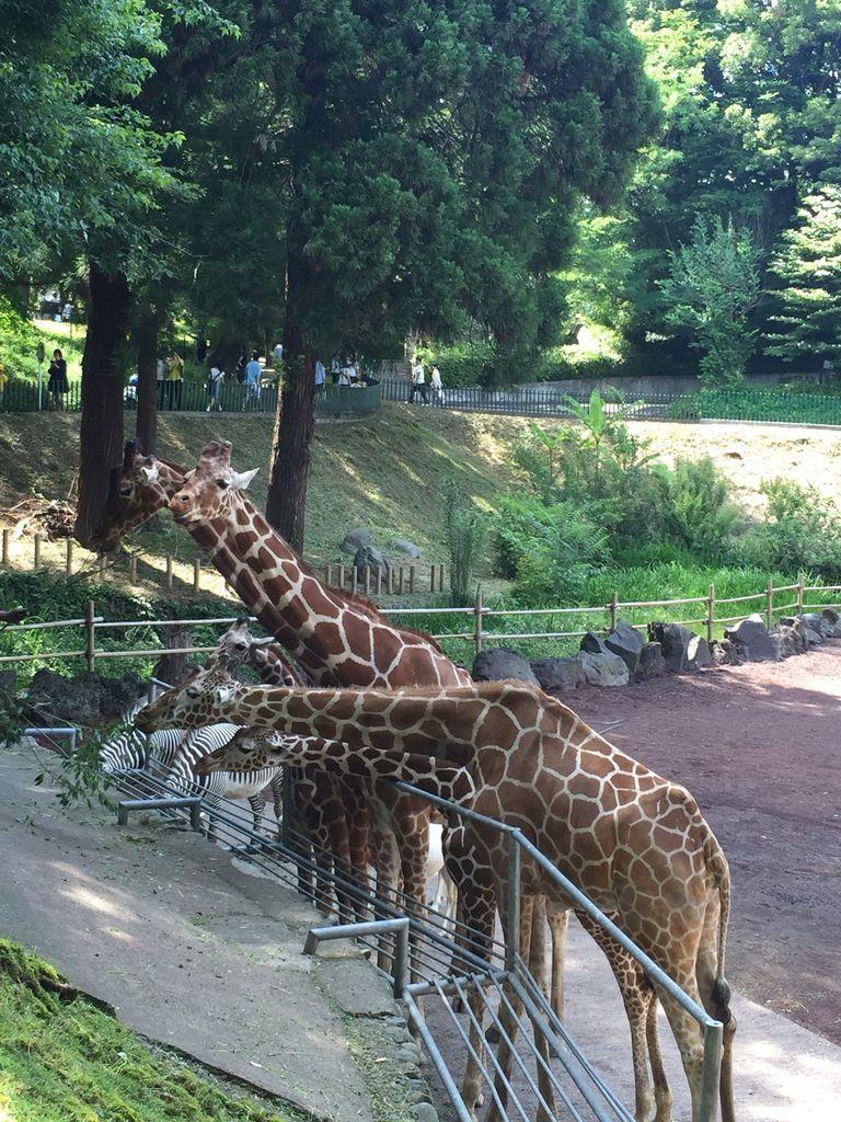 東京都多摩動物公園