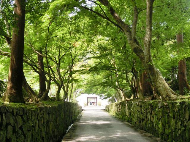 青紅葉のトンネルと水音が涼を感じさせてくれます。_興聖寺の琴坂