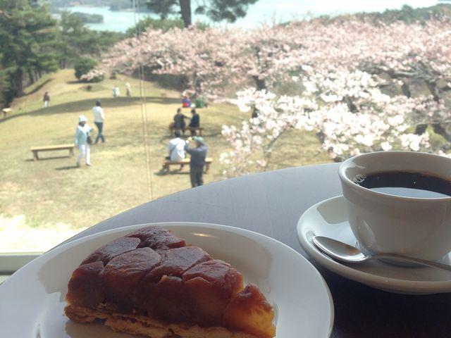 コントラストが美しい_西行戻しの松公園の桜