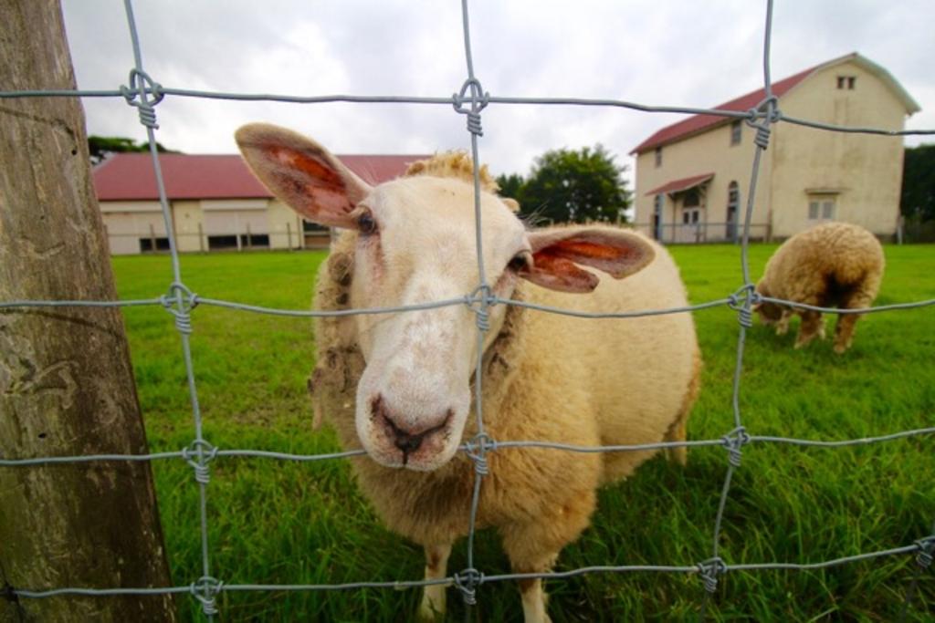 滋賀県畜産技術振興センター