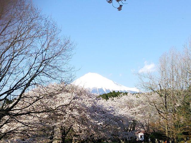 岩本山公園_岩本山公園