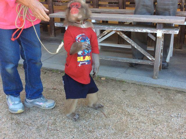 上手にできたね_小豆島銚子渓自然動物園 お猿の国