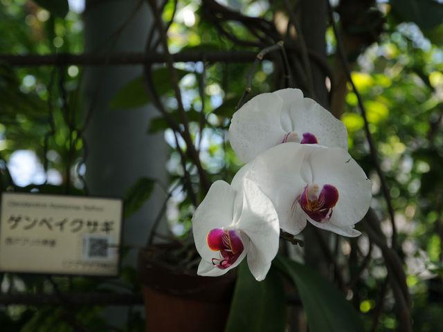 東京都薬用植物園_東京都薬用植物園