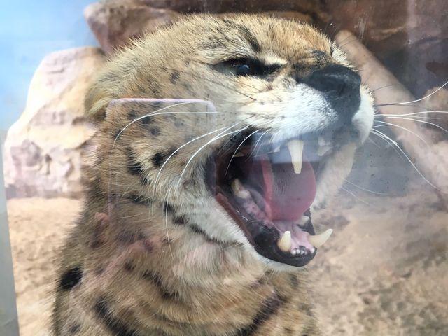 福山市立動物園_福山市立動物園