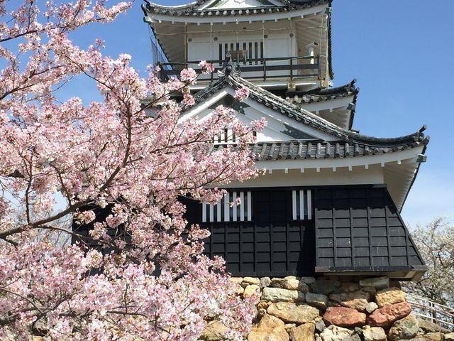 いろんな角度から写真を撮っている人が多かったです_浜松城