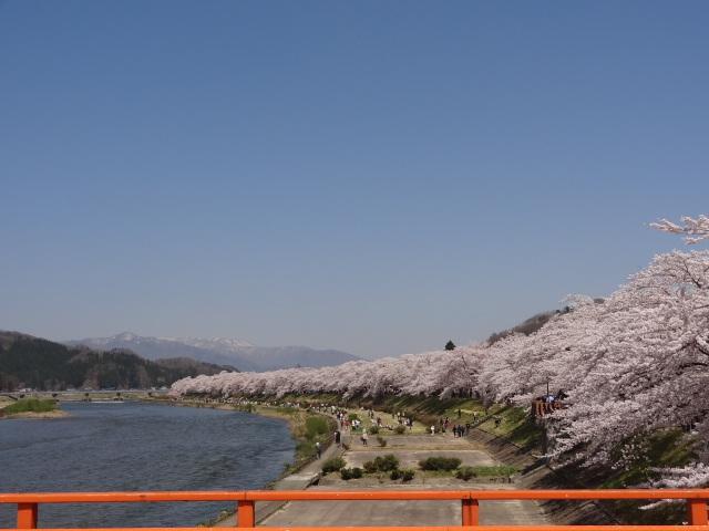 桜1_桧木内川堤の桜並木
