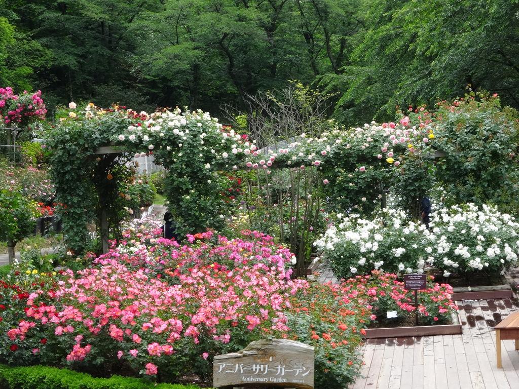 花巻温泉 バラ園