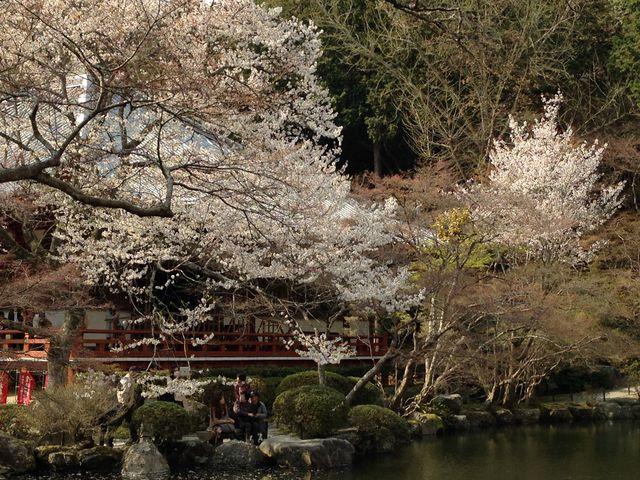 池に映える桜_醍醐寺