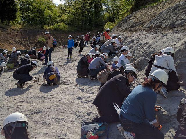 発掘体験は大人気。_いわき市アンモナイトセンター