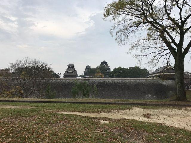 熊本城公園の桜_熊本城の桜
