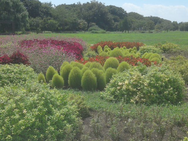 メルヘンチックな植物が植えてありました。_フラワーパーク江南