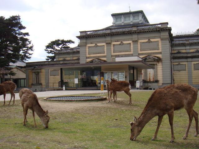 鹿がブラブラしてます_奈良国立博物館