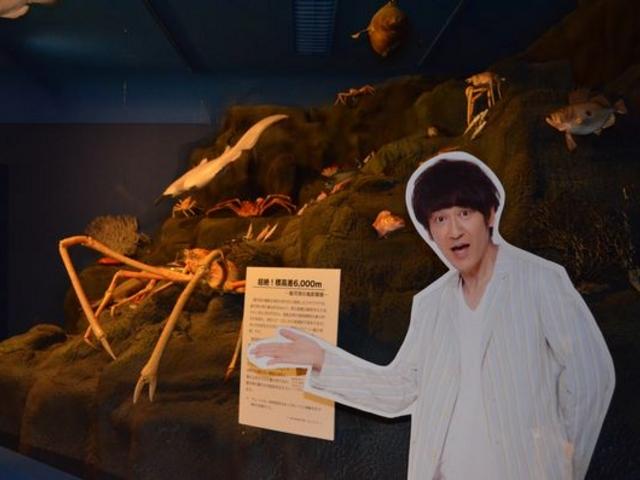 有名人が紹介する博物館。レアなサメも・・_造船郷土資料博物館