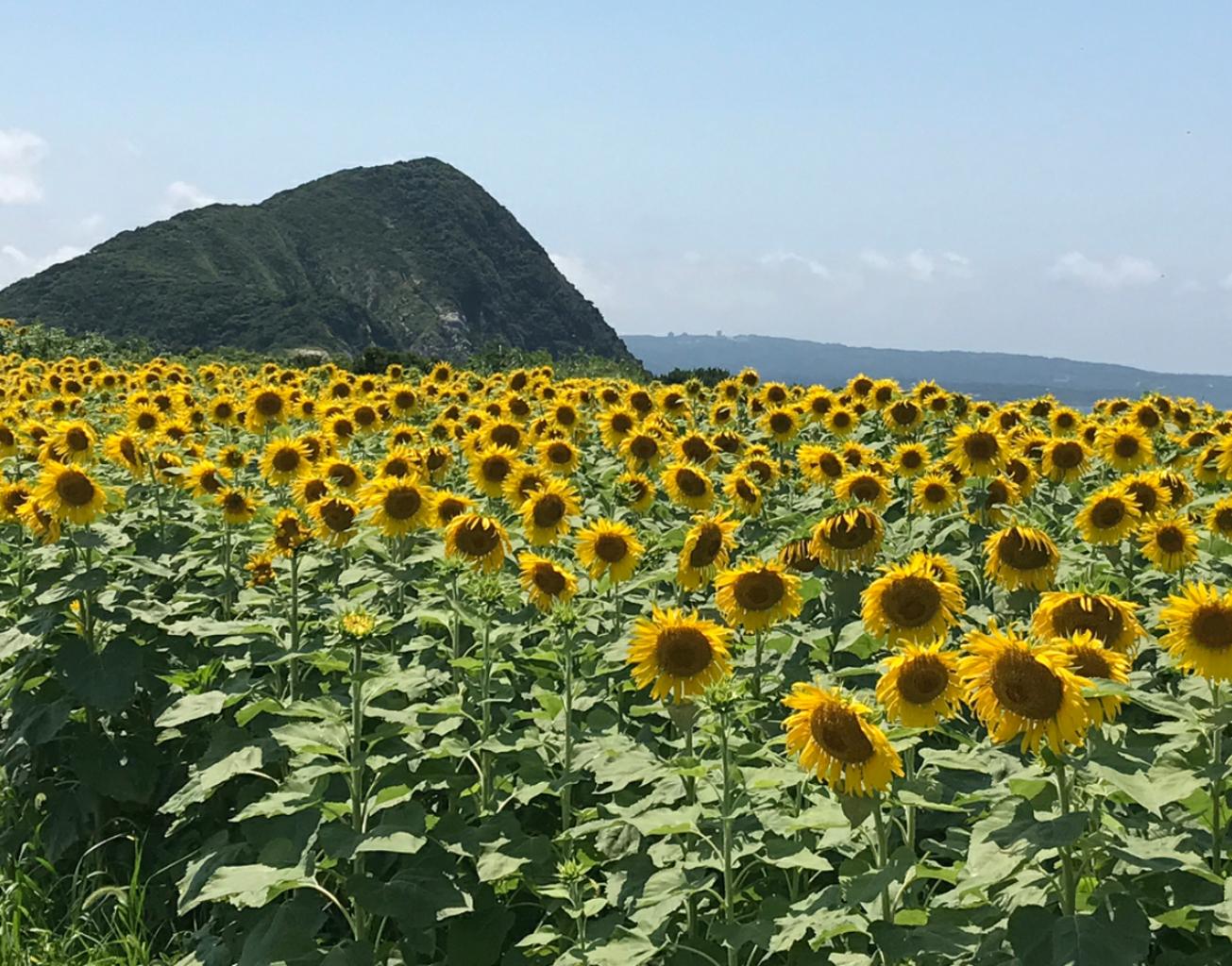 魚津ケ崎公園
