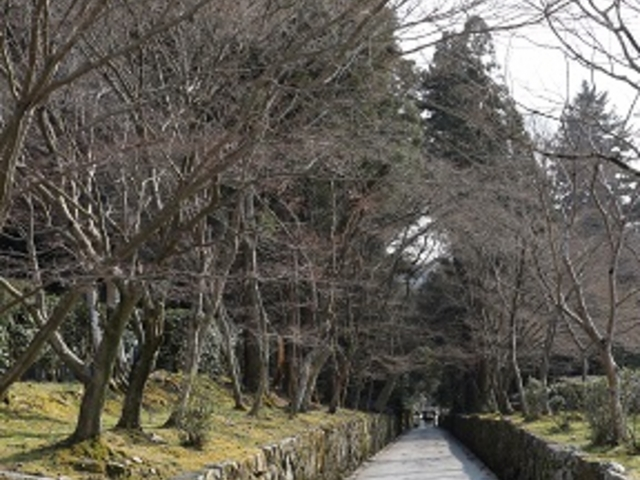 琴坂_興聖寺の琴坂