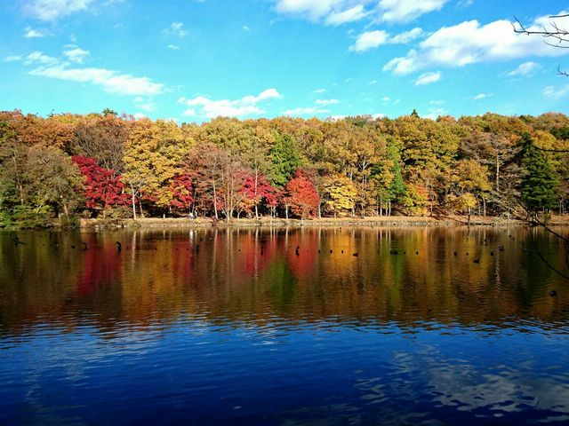 湖面の紅葉_井頭公園