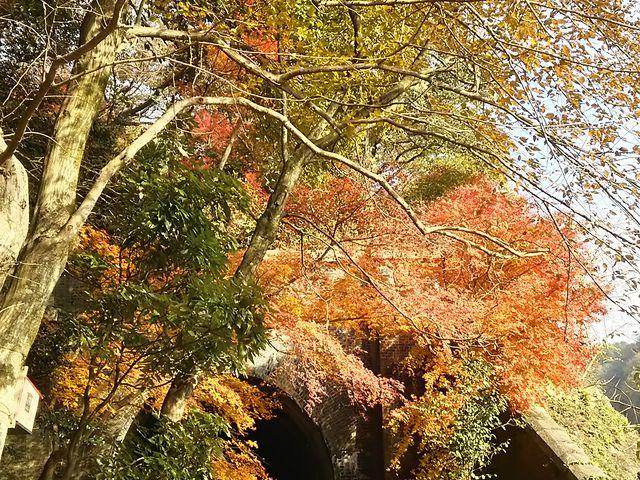 紅葉が綺麗でした。_愛岐トンネル群