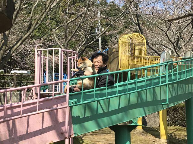 遊具もあり、大人も思わず楽しんでしまいます_滝頭公園