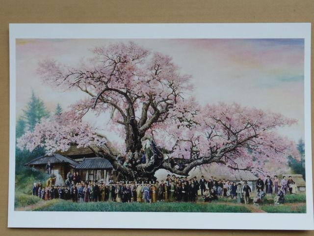 ポストカード「明治40年の神代桜」です。現地で設和画伯から偶然でしたが頂きました。_山高神代桜