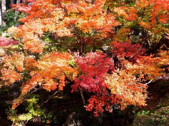 金剛輪寺庭園(明寿院)