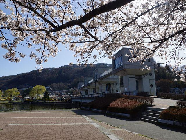 釜口水門の桜_岡谷湖畔公園