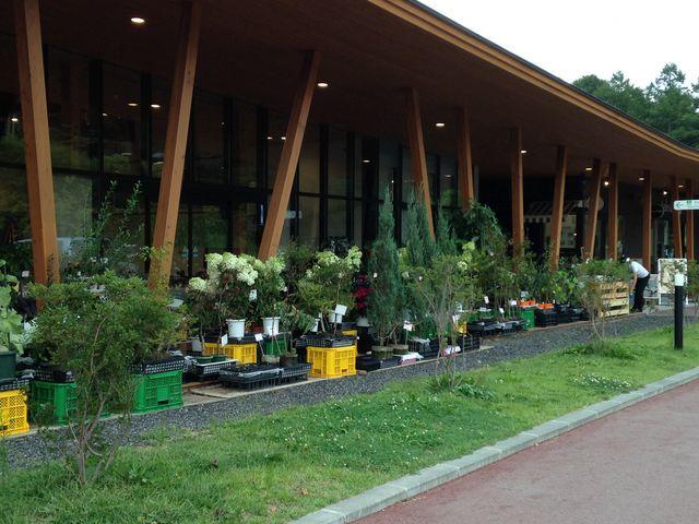夏は苗を多く売っていました。園芸好きにはたまりません_軽井沢発地市庭