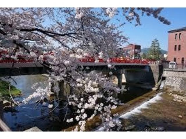 桜の時期がおすすめです!_中橋