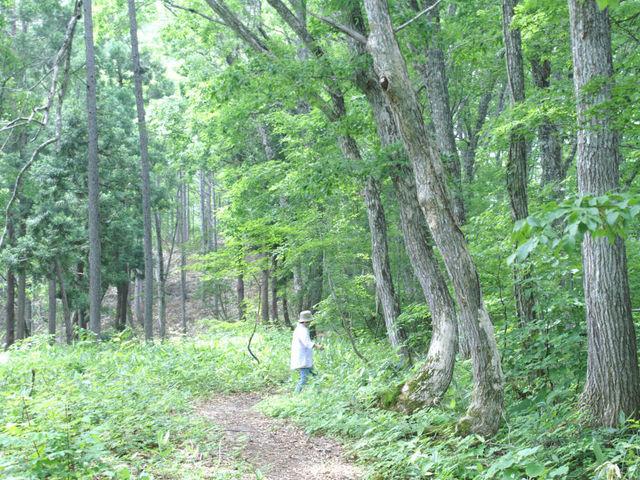 癒しの森1_癒しの森