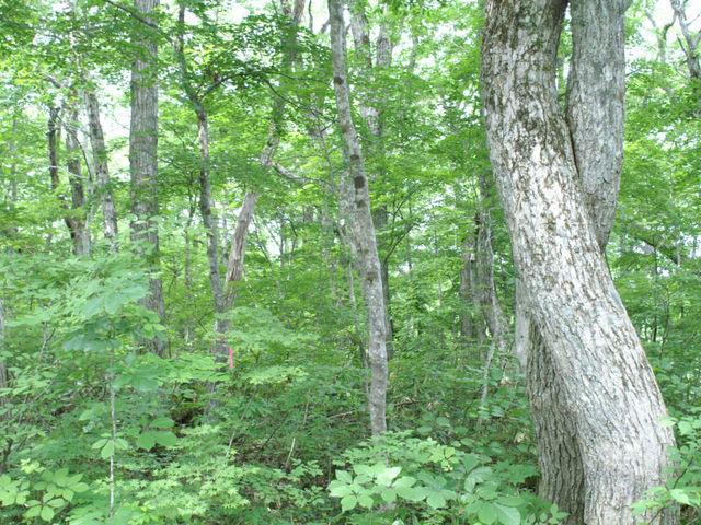 森2_癒しの森