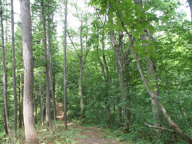 森3_癒しの森