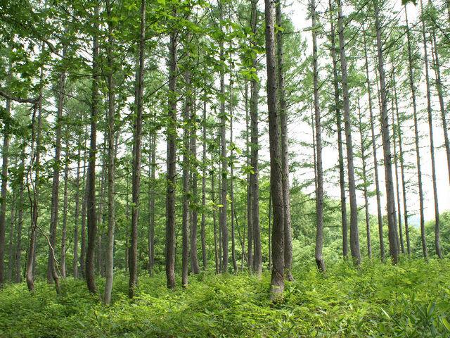 森4_癒しの森