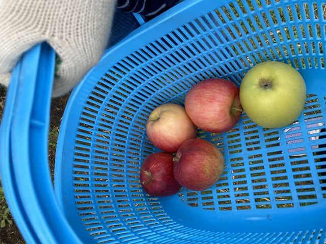 最初に説明していただけ子供でも簡単に出来ましたんだけど_田村りんご園