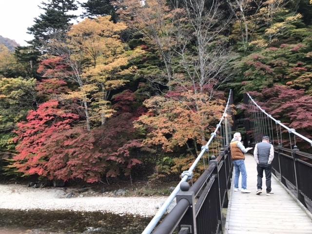 紅葉🍁の色最高_日塩もみじラインの新緑と紅葉