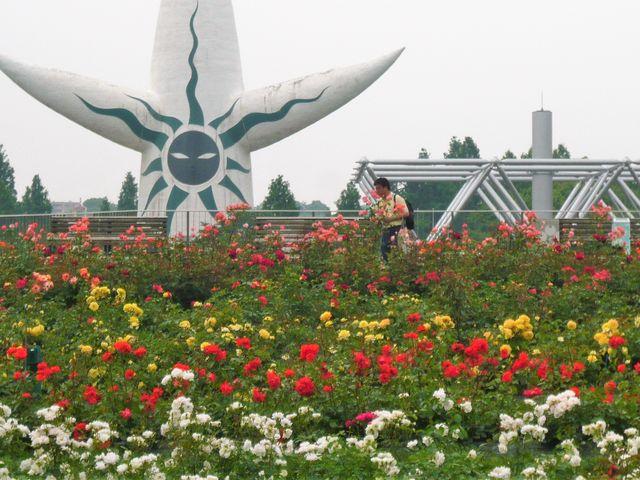 平和のバラ園の風景_万博記念公園・日本庭園