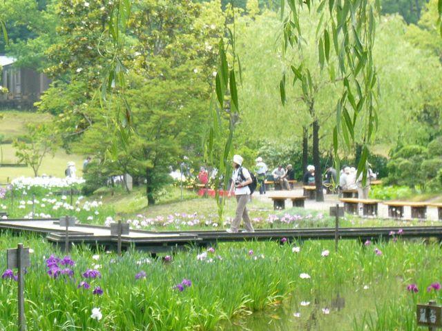 日本庭園(花しょうぶ園)の風景_万博記念公園・日本庭園