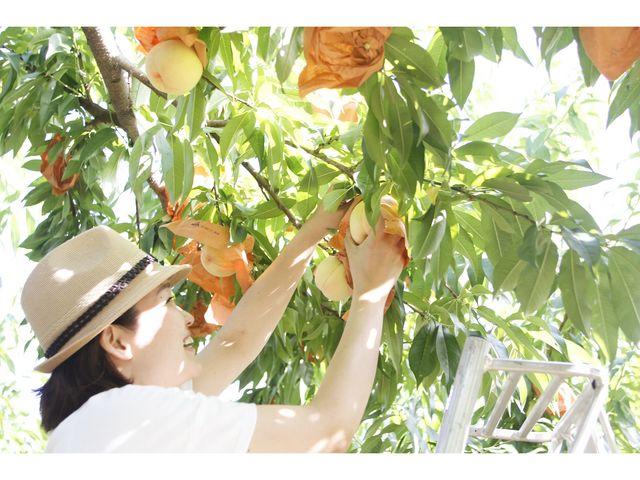 岡山県下最大級の桃園で名産の桃を堪能。_西山ファーム
