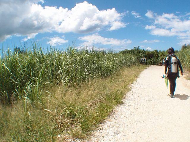 さとうきび畑を見ながらビーチへ☆_Marine activity NATURA(ナトゥーラ)