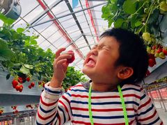 strawberry farm BUNKAENの写真1