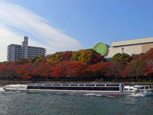 造幣局付近のさくら紅葉_大阪水上バス「アクアライナー」